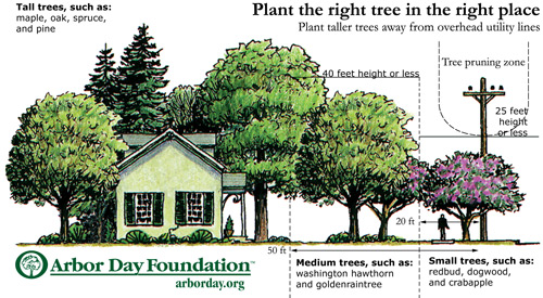 Planting Tree Guidelines